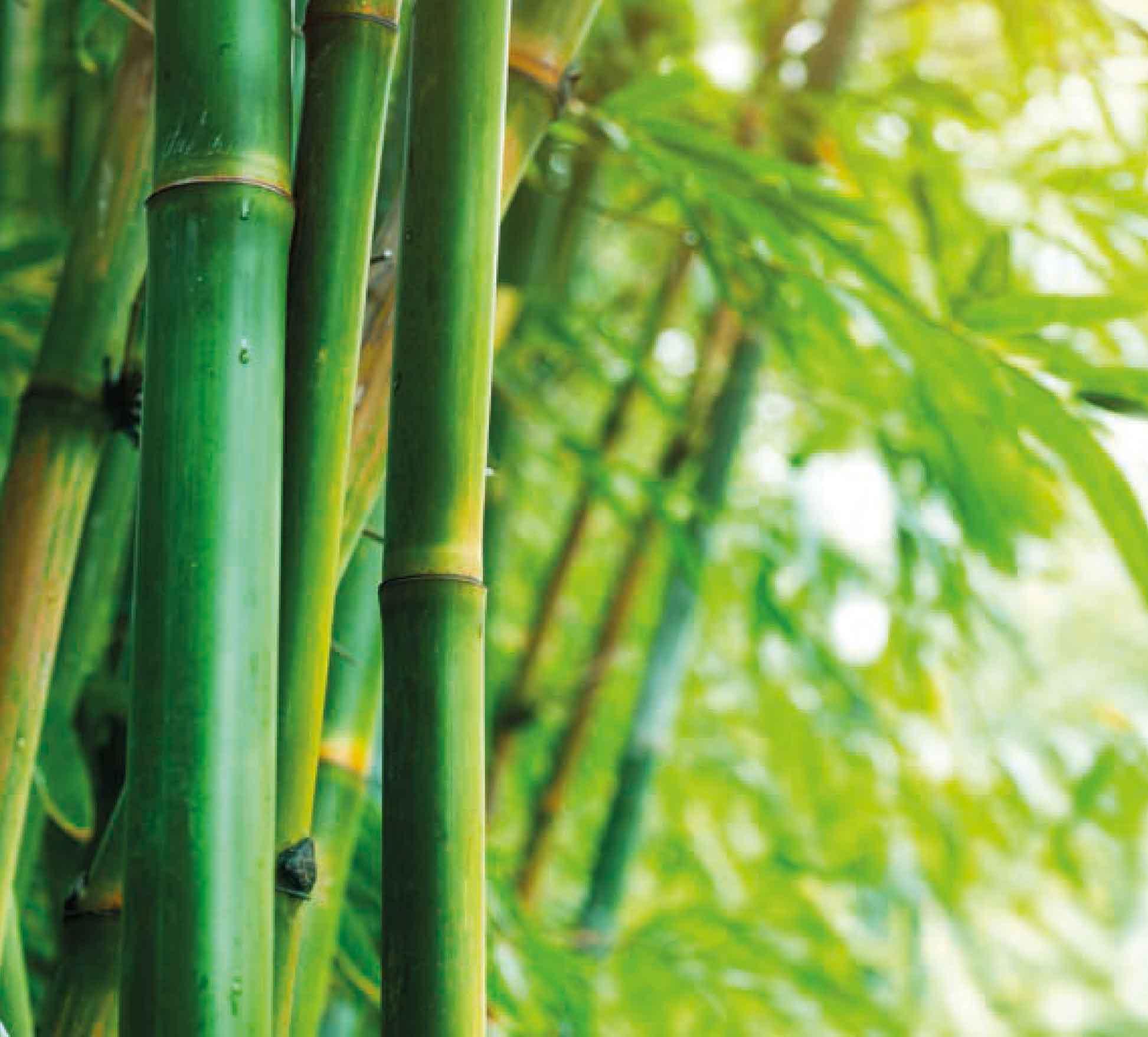 Textile de bambou